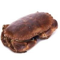 春播活水产大西洋活面包蟹(600-800g)1只装