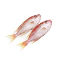 马来西亚野生海捕长尾大眼鲷2条装
