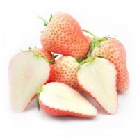 安心直采春之味草莓12~16粒装