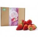 王光远种植有机红颜草莓12-16粒装