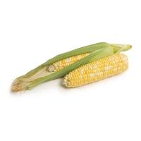 春播安心直采水果玉米2根装