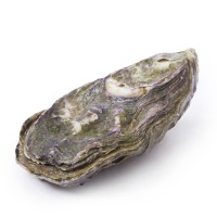 春播活水产新西兰马尔伯勒生蚝L号6只装(内附蚝刀)