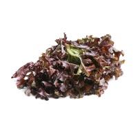 春播安心直采水培紫橡叶生菜300g
