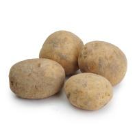 春播安心直采土豆500g