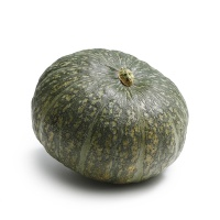 王红军种植朔州小南瓜1.2-1.5kg