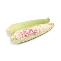 春播安心直采西双版纳小糯玉米400-500g(2-3根)